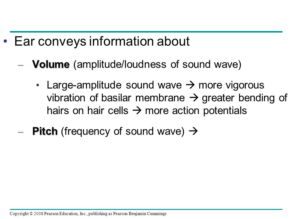 Ear conveys information about