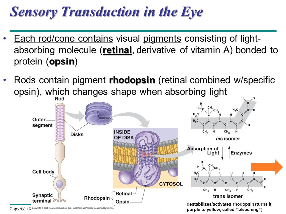 Sensory Transduction in the Eye