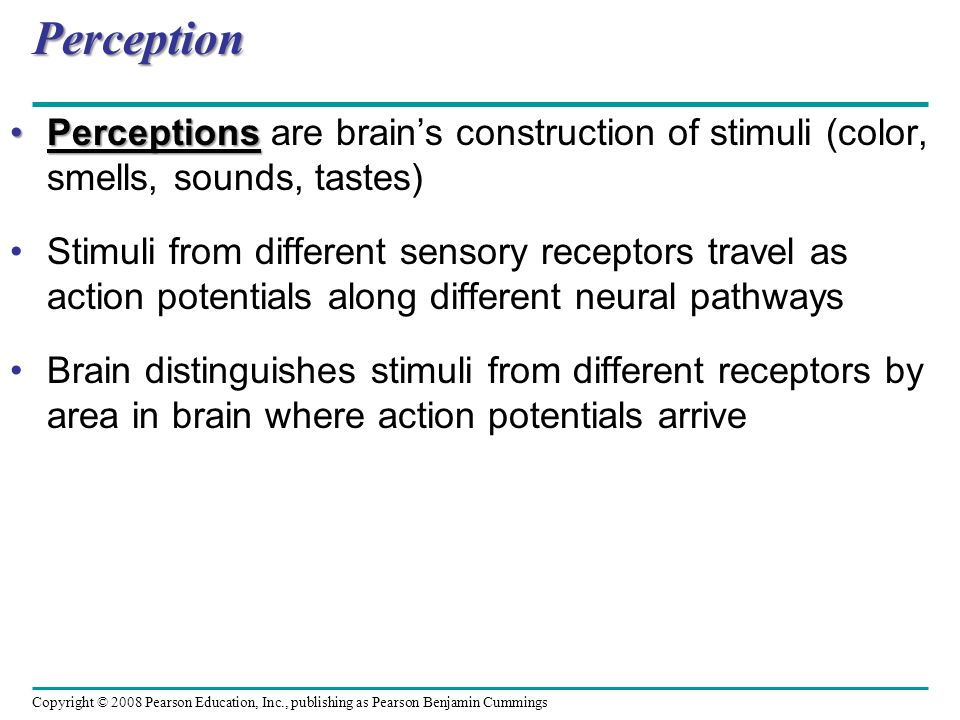 Perception Perceptions are brain's construction of stimuli (color, smells, sounds, tastes)