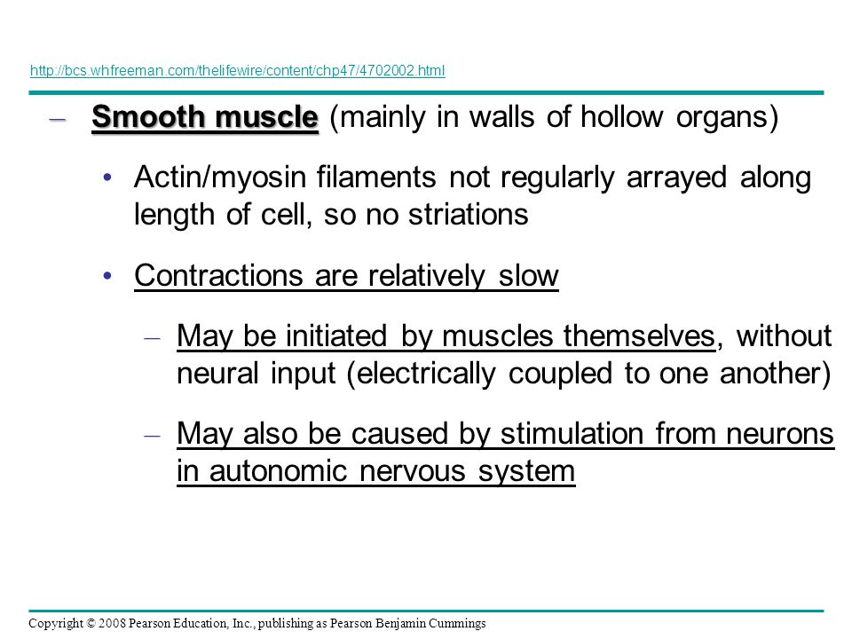 Smooth muscle (mainly in walls of hollow organs)
