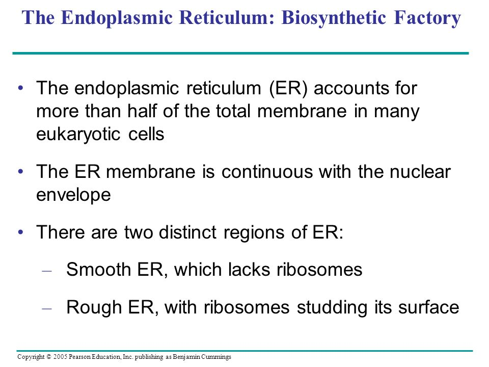 The Endoplasmic Reticulum: Biosynthetic Factory