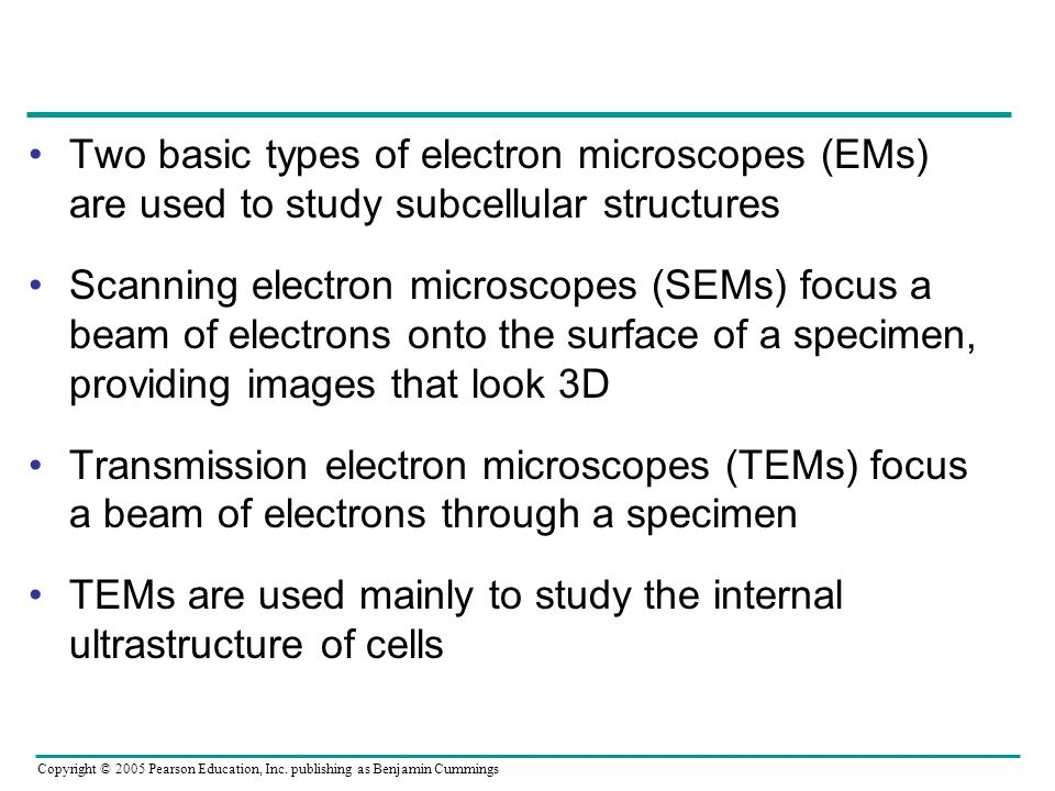 Two basic types of electron microscopes (EMs) are used to study subcellular structures