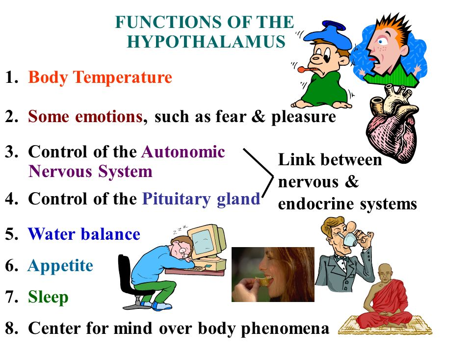 FUNCTIONS OF THE HYPOTHALAMUS. 1. Body Temperature. 2. Some emotions, such as fear & pleasure. 3. Control of the Autonomic.