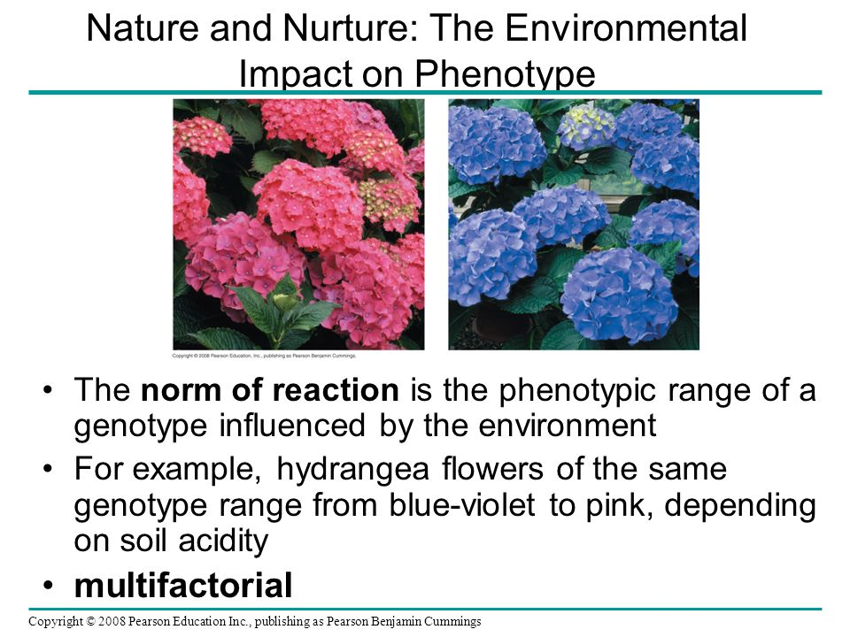 Nature and Nurture: The Environmental Impact on Phenotype