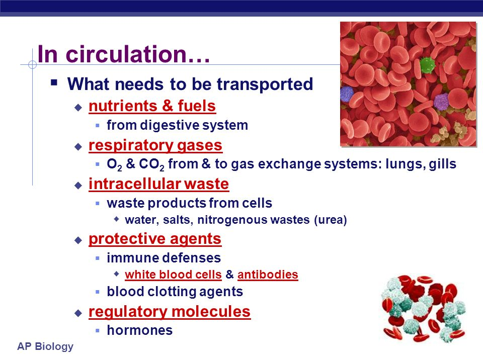 In circulation… What needs to be transported nutrients & fuels