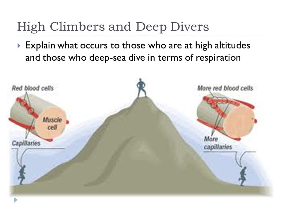 High Climbers and Deep Divers