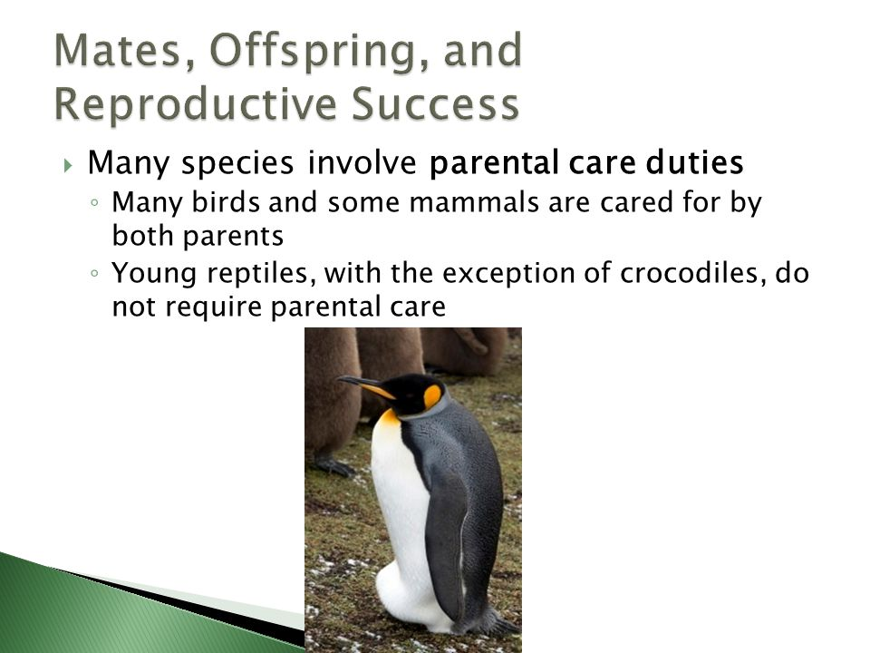 Mates, Offspring, and Reproductive Success