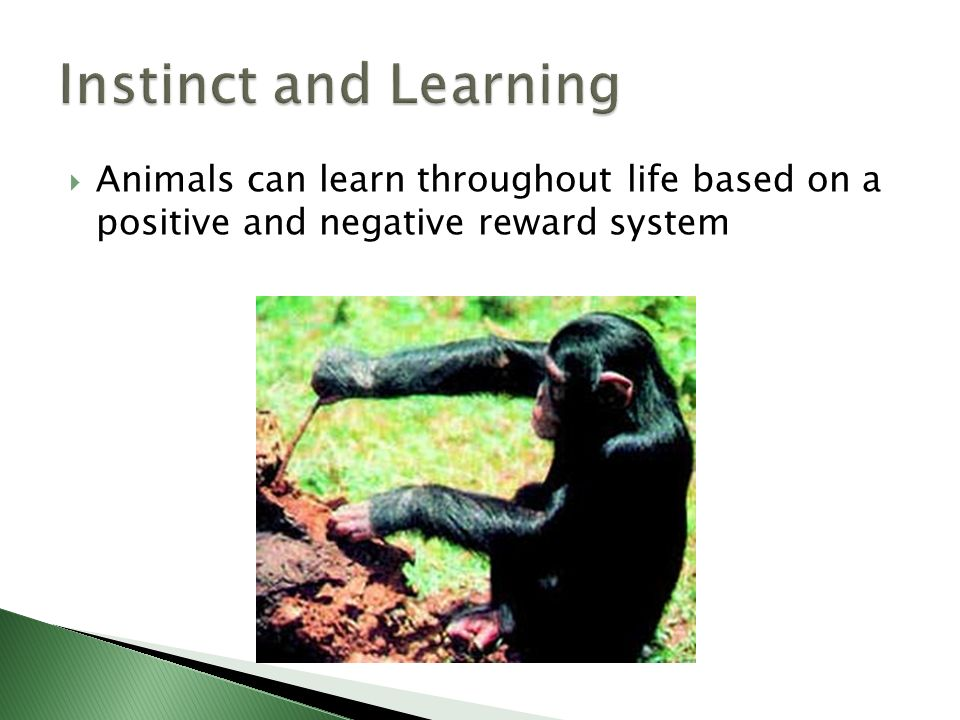 Instinct and Learning Animals can learn throughout life based on a positive and negative reward system.