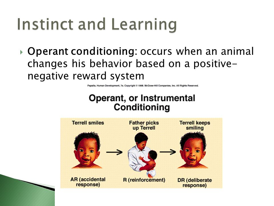 Instinct and Learning Operant conditioning: occurs when an animal changes his behavior based on a positive- negative reward system.