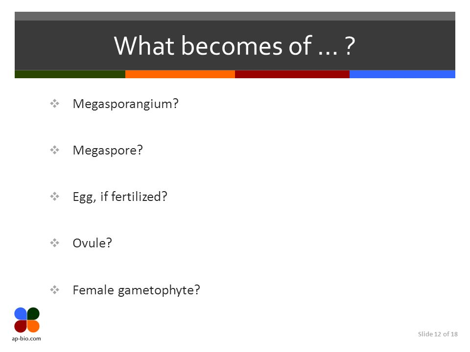What becomes of … Megasporangium Megaspore Egg, if fertilized