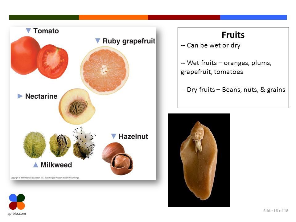 Fruits -- Can be wet or dry