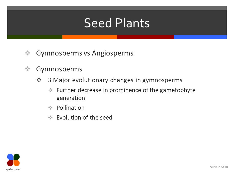 Seed Plants Gymnosperms vs Angiosperms Gymnosperms