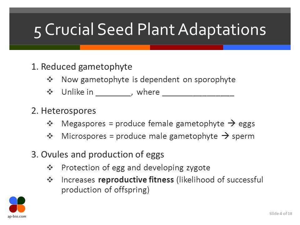 5 Crucial Seed Plant Adaptations