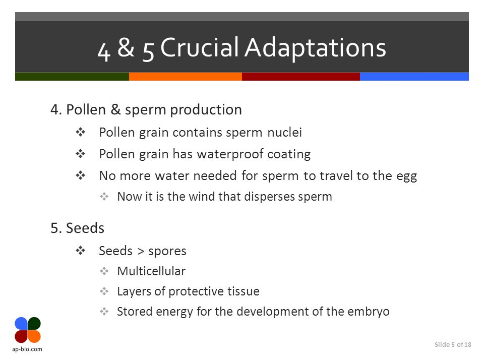 4 & 5 Crucial Adaptations 4. Pollen & sperm production 5. Seeds