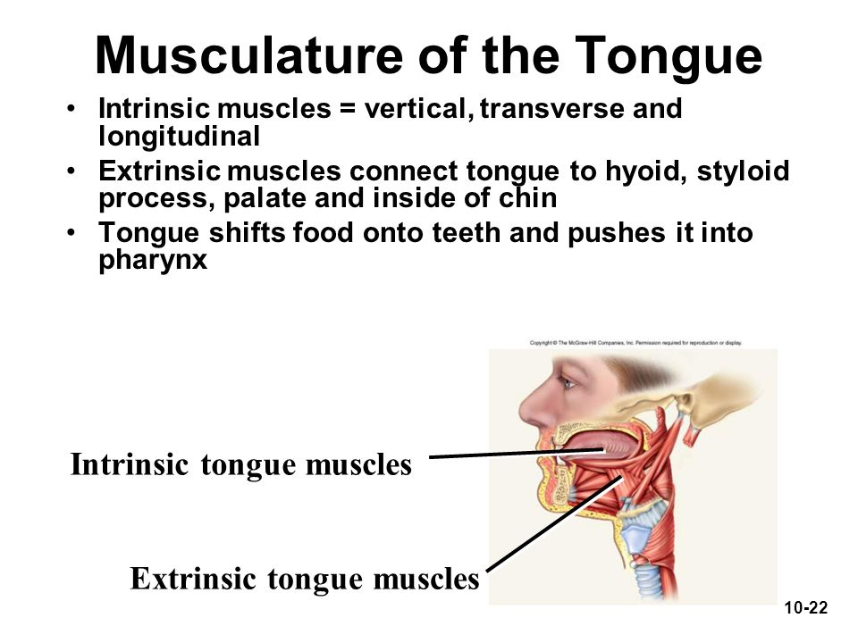 Musculature of the Tongue