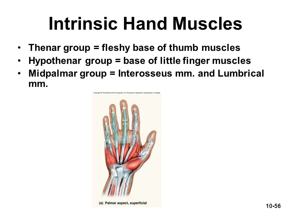 Intrinsic Hand Muscles