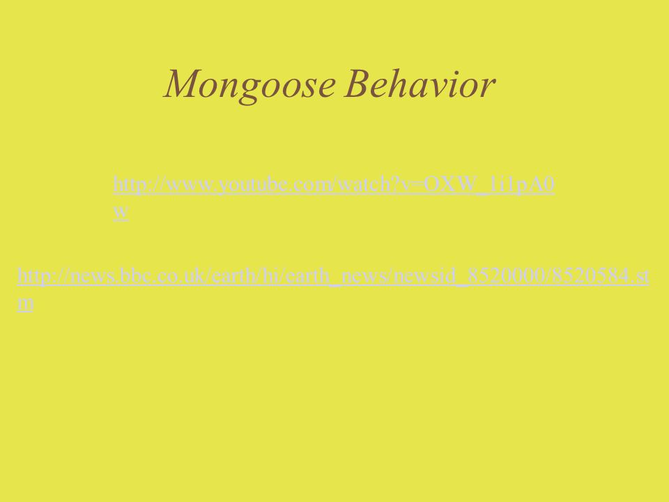 Mongoose Behavior http://www.youtube.com/watch v=OXW_1i1pA0w