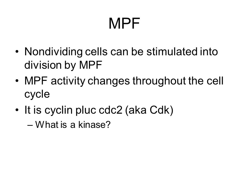 MPF Nondividing cells can be stimulated into division by MPF