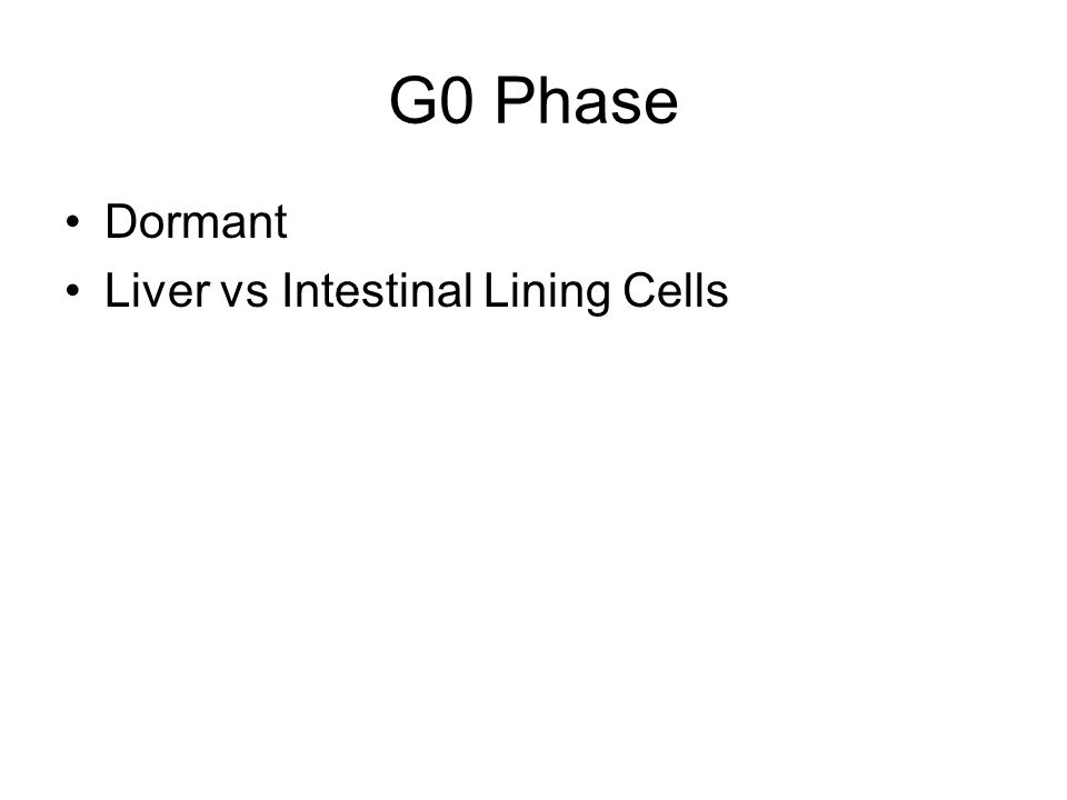 G0 Phase Dormant Liver vs Intestinal Lining Cells
