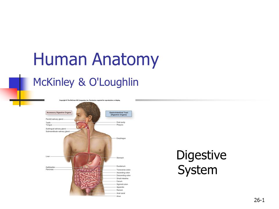 Human Anatomy Mckinley Oloughlin Ppt Download