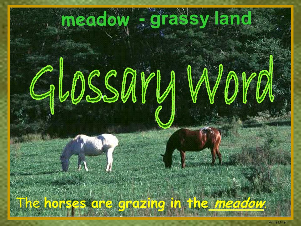 meadow - grassy land Glossary Word