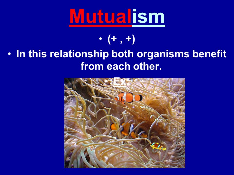 In this relationship both organisms benefit from each other.