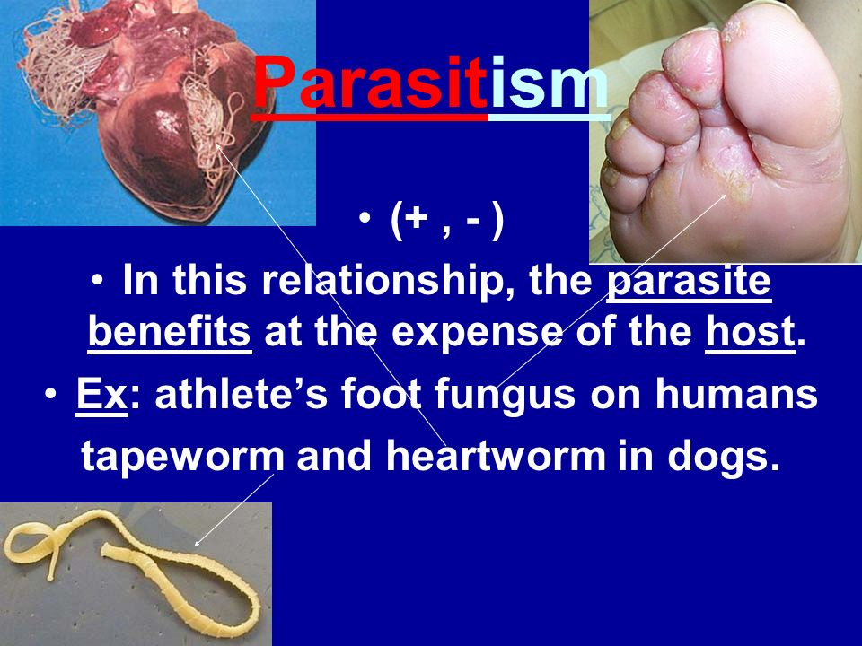 Ex: athlete's foot fungus on humans tapeworm and heartworm in dogs.