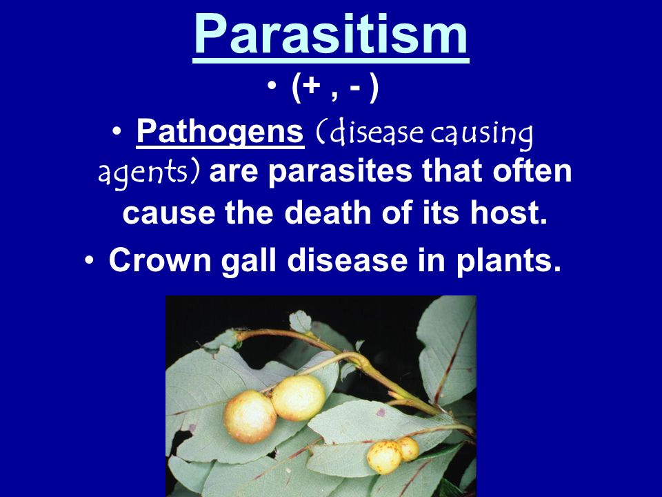 Crown gall disease in plants.