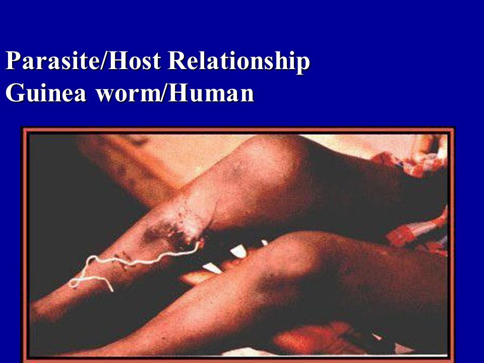 Parasite/Host Relationship