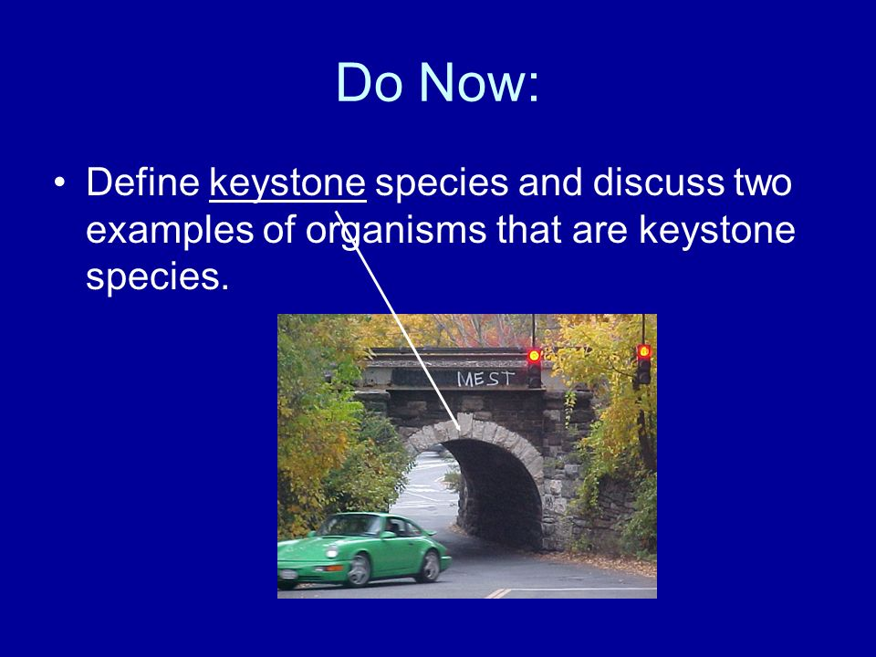 Do Now: Define keystone species and discuss two examples of organisms that are keystone species.