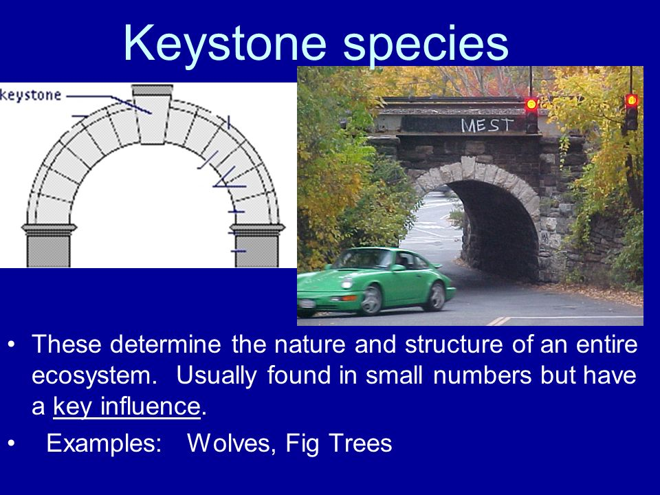 Keystone species These determine the nature and structure of an entire ecosystem. Usually found in small numbers but have a key influence.