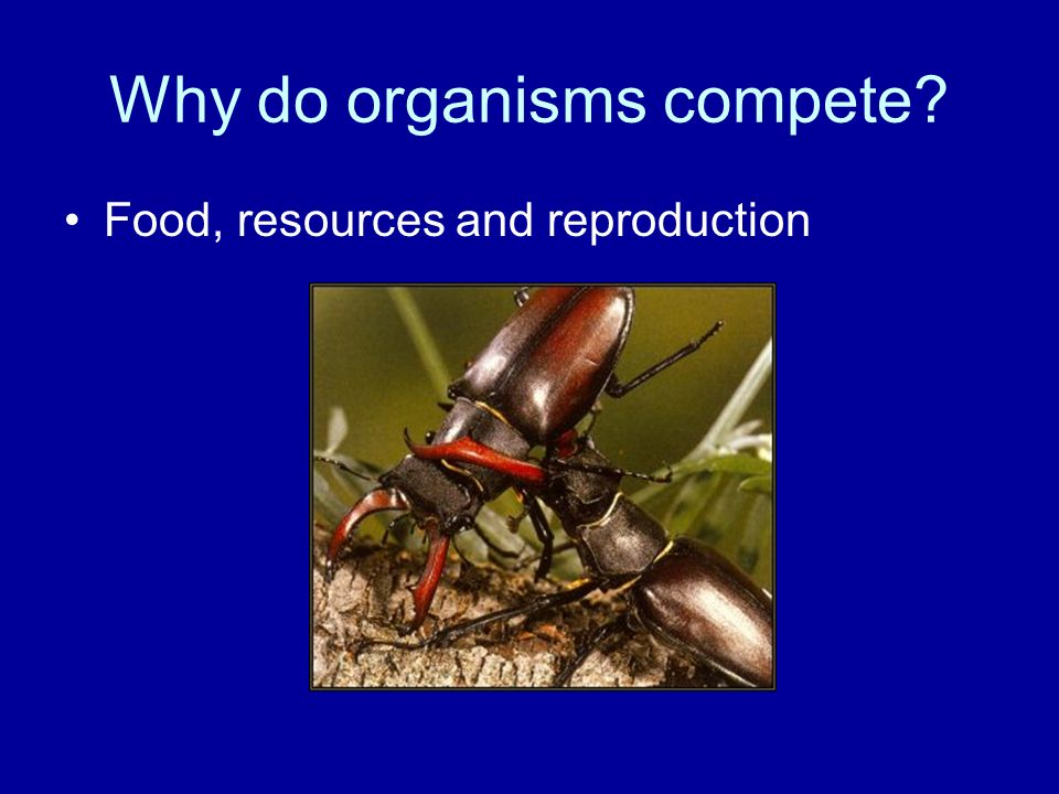 Why do organisms compete