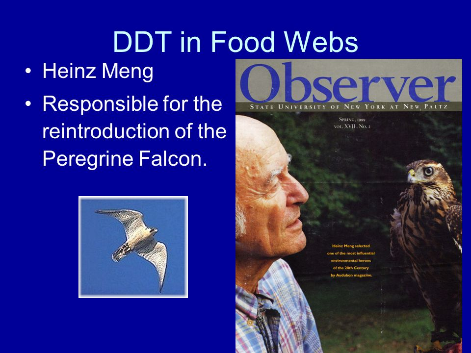 DDT in Food Webs Heinz Meng