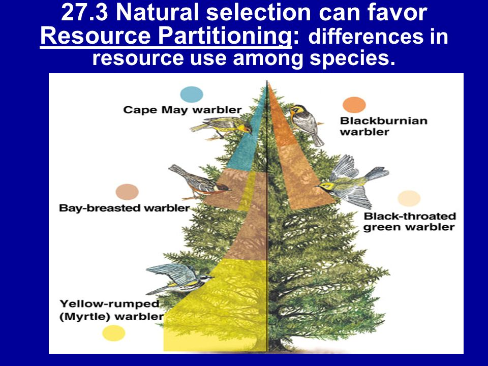 27.3 Natural selection can favor Resource Partitioning: differences in resource use among species.