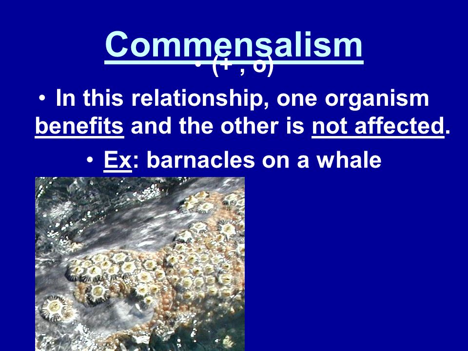 Ex: barnacles on a whale