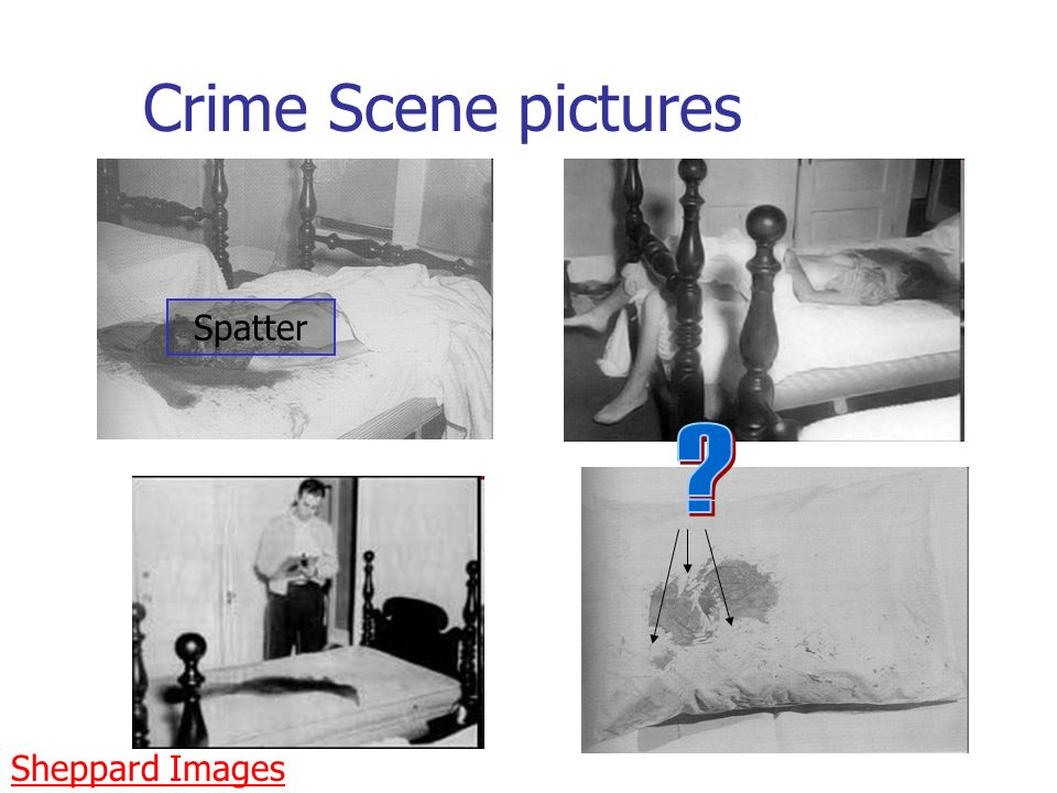 Crime Scene pictures Spatter Sheppard Images