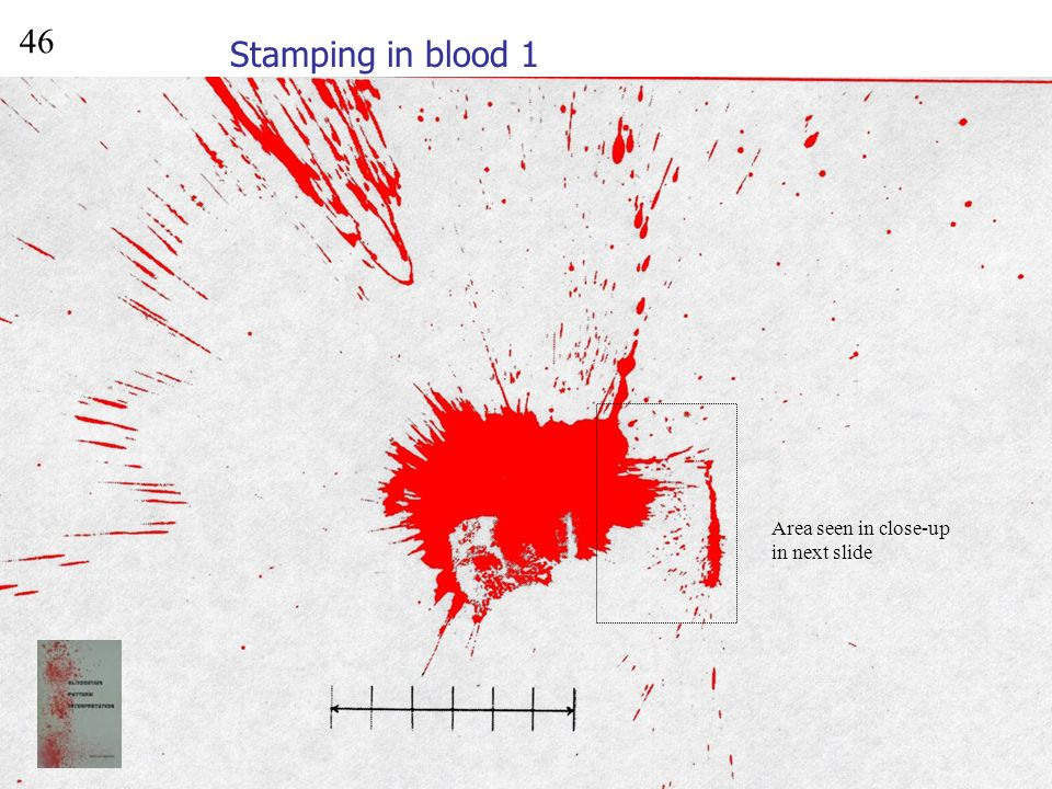 46 Stamping in blood 1 Area seen in close-up in next slide