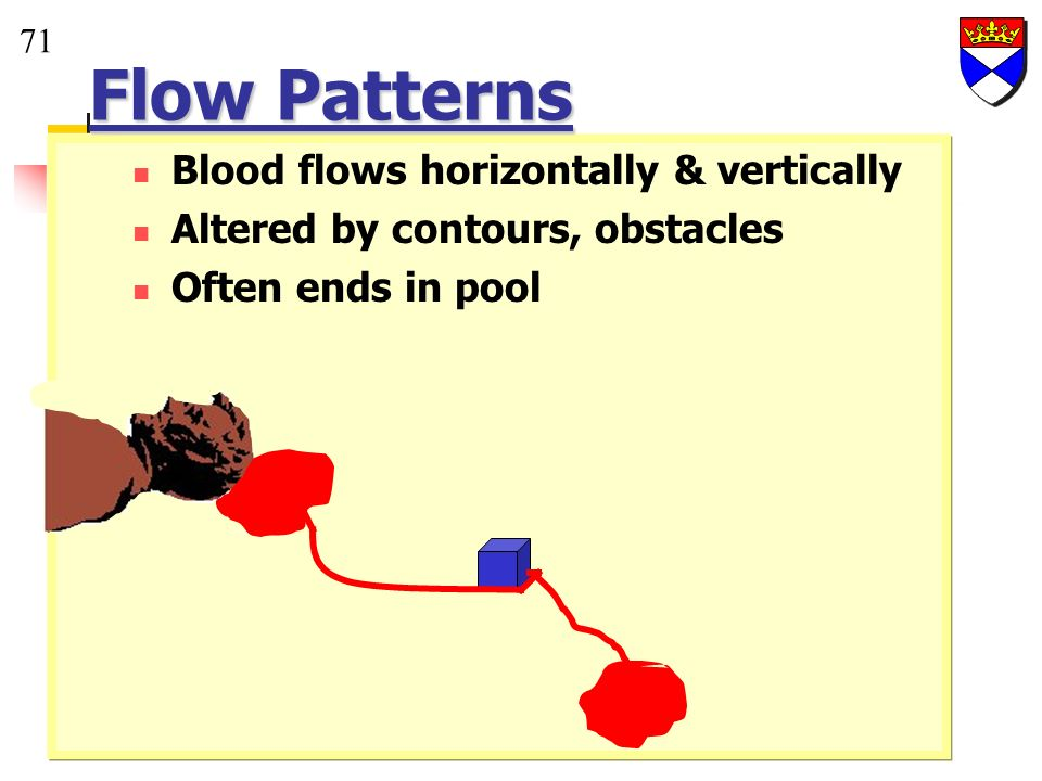 Flow Patterns Blood flows horizontally & vertically