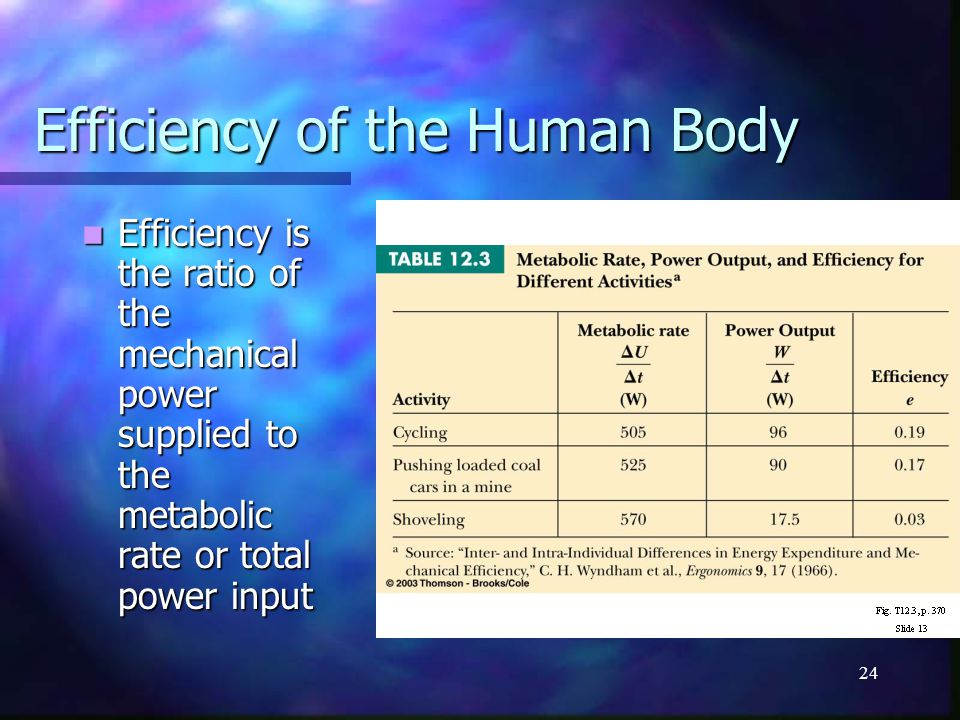 Efficiency of the Human Body
