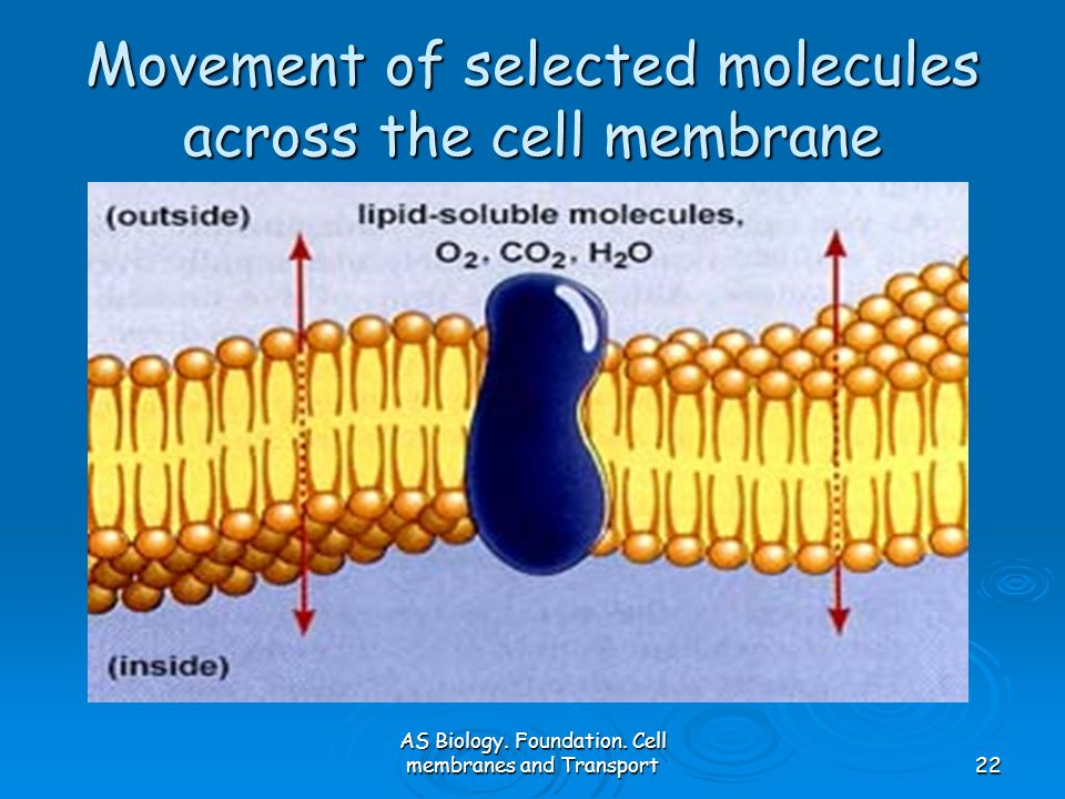 Movement of selected molecules across the cell membrane
