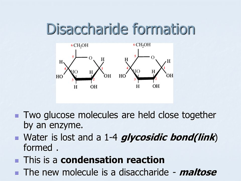 Disaccharide formation
