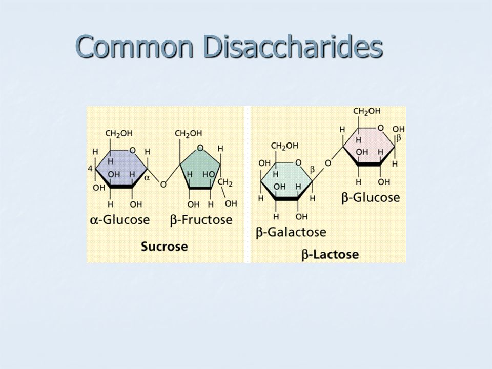 Common Disaccharides