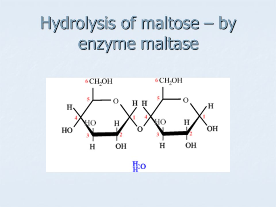 Hydrolysis of maltose – by enzyme maltase