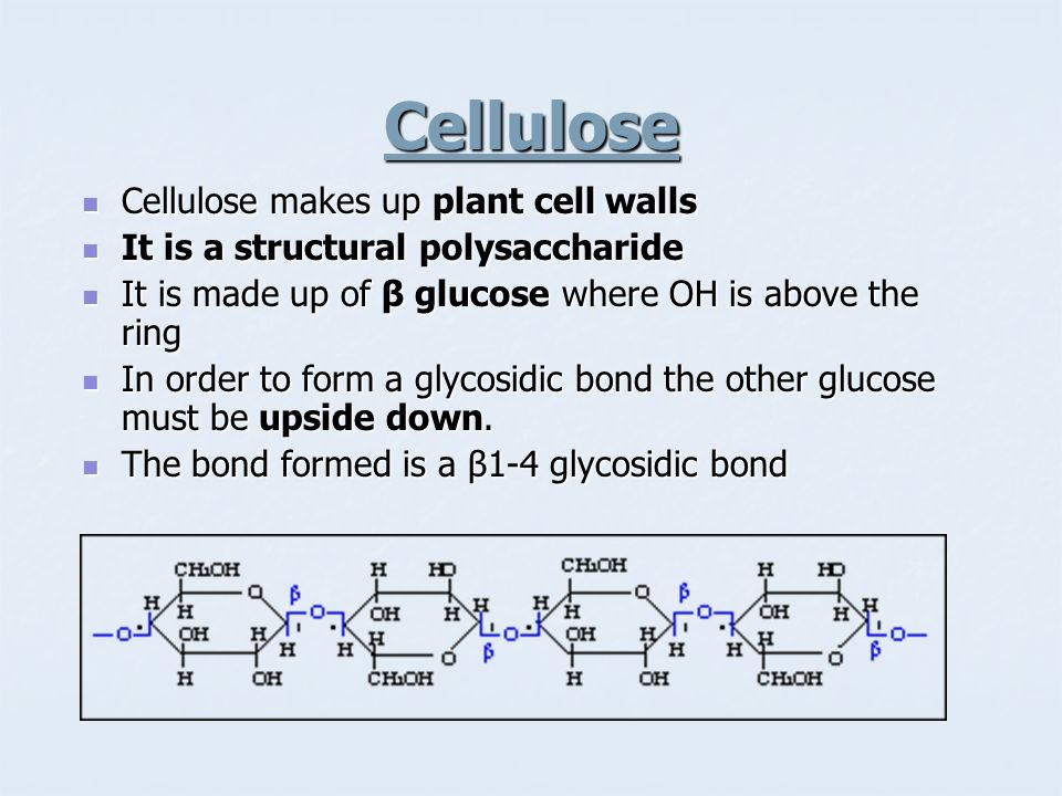 Cellulose Cellulose makes up plant cell walls