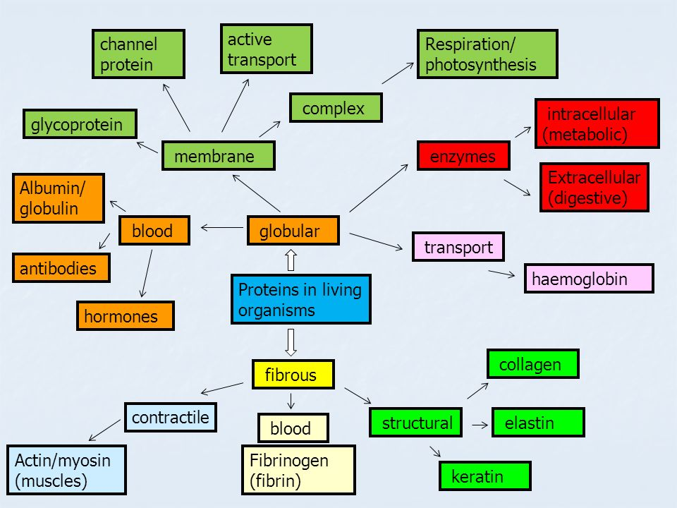 active transport channel protein. Respiration/ photosynthesis. complex. intracellular (metabolic)