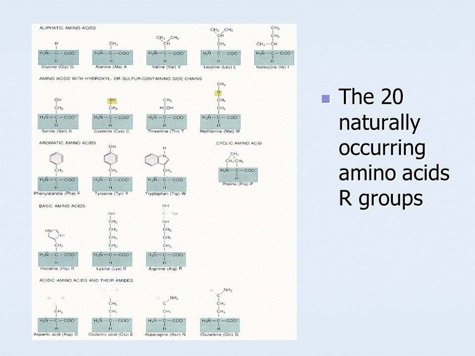 The 20 naturally occurring amino acids R groups