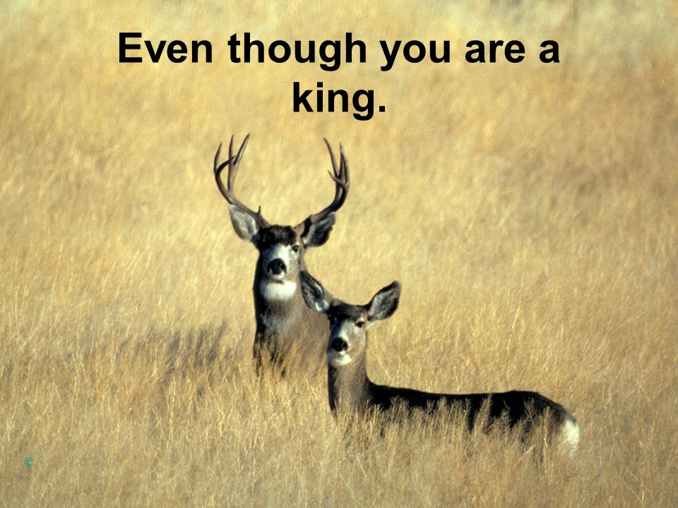 Even though you are a king.