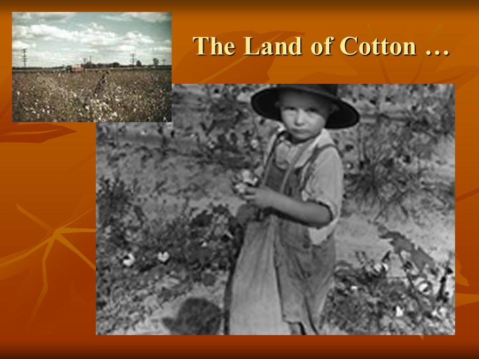 The Land of Cotton …