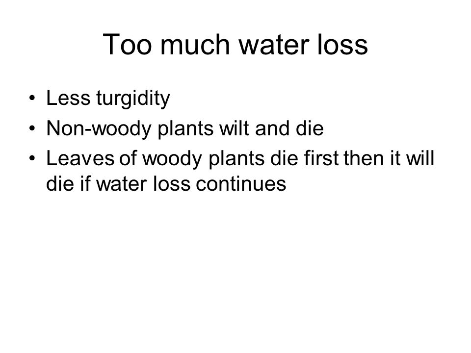 Too much water loss Less turgidity Non-woody plants wilt and die