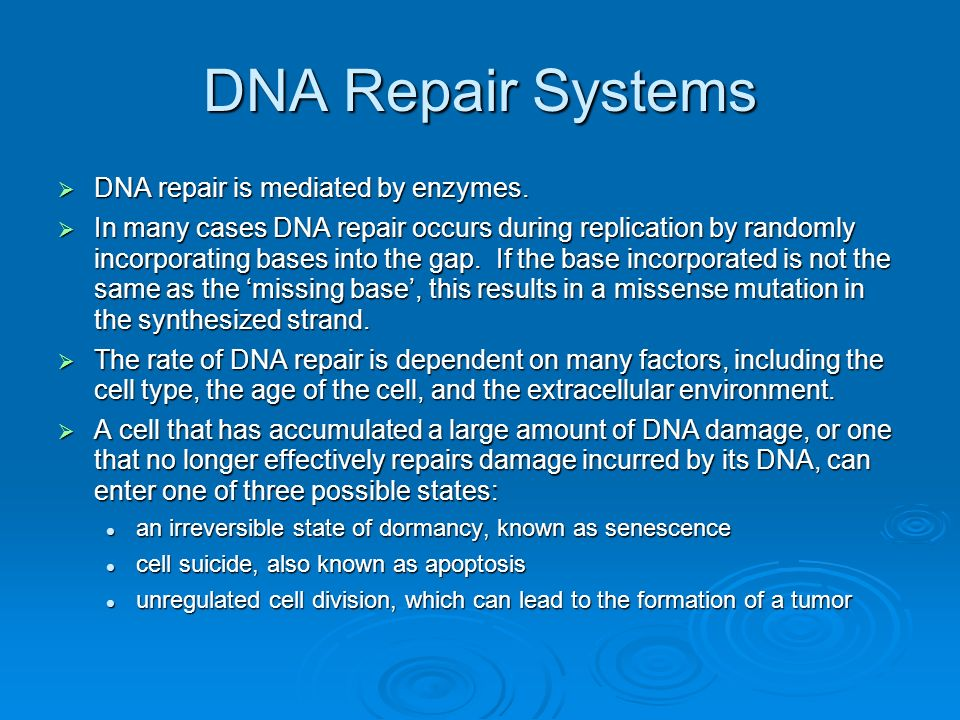 DNA Repair Systems DNA repair is mediated by enzymes.